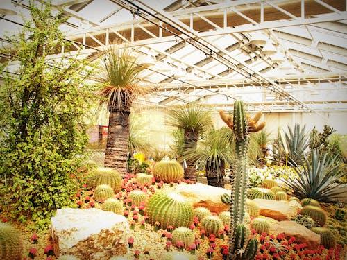 Gratis stockfoto met binnen, broeikas, cactussen, doornen