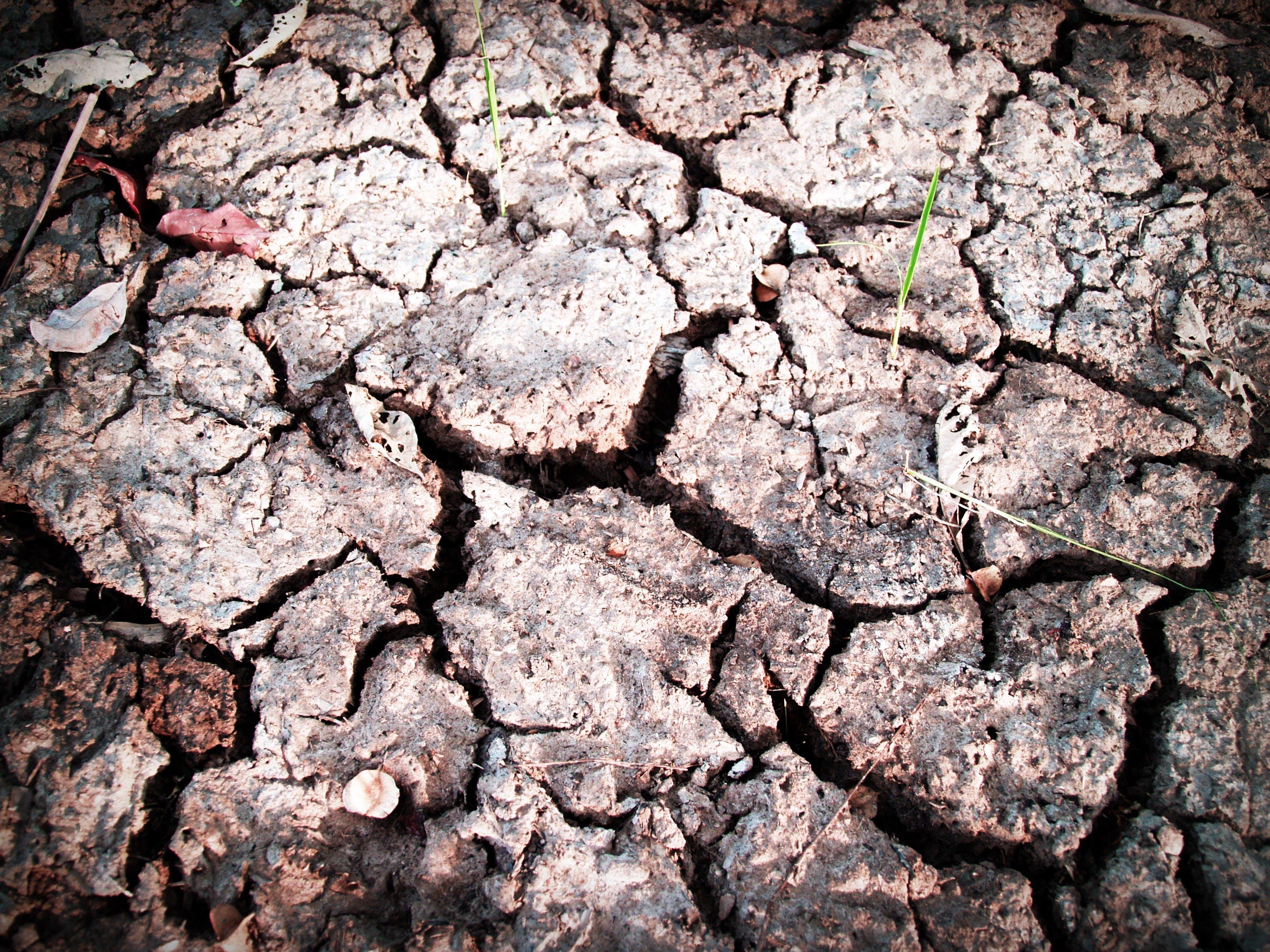 Gratis lagerfoto af close-up, geologi, græs, hakket