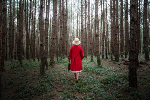 Woman in Red Coat Surrounded by Trees