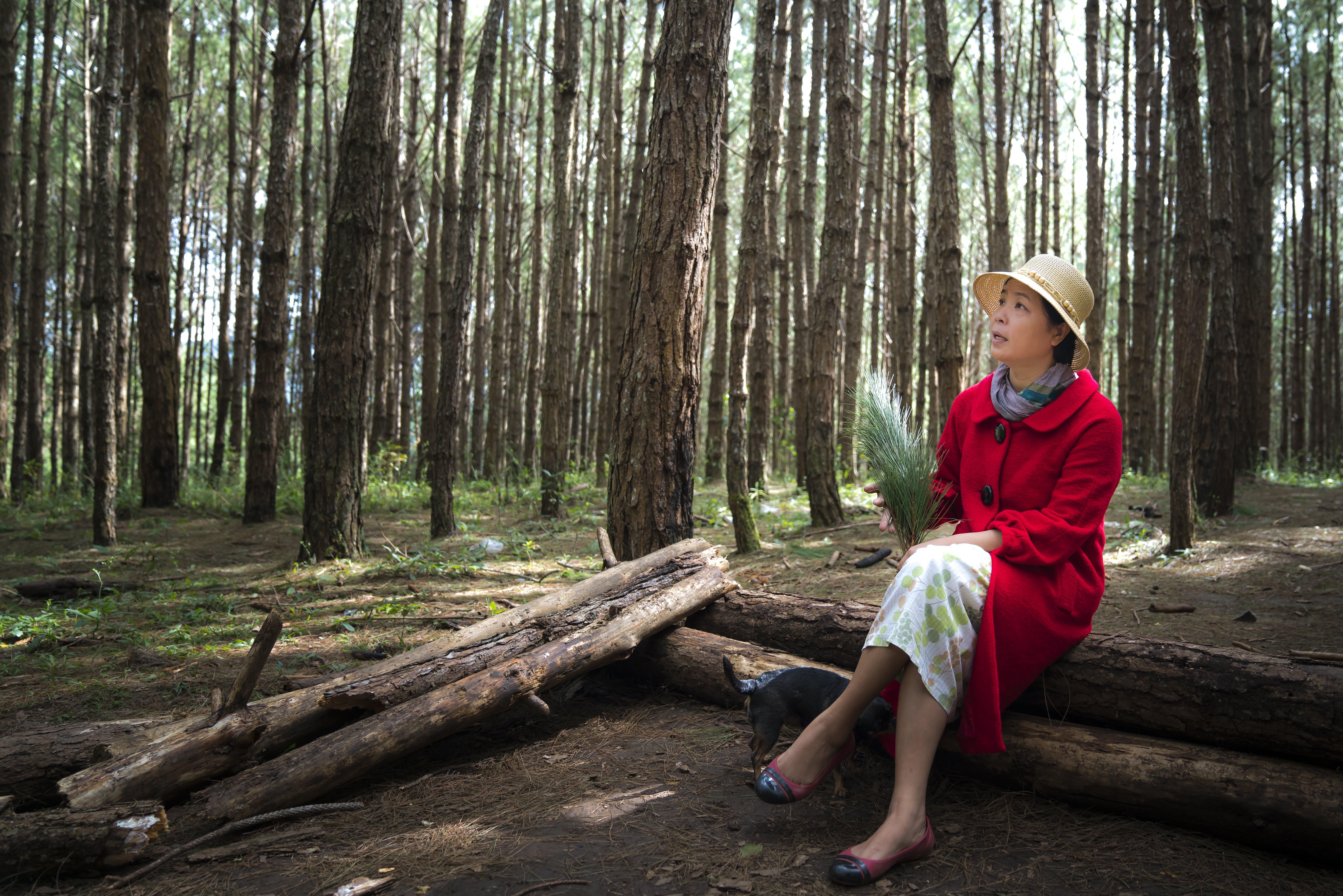 Foto d'estoc gratuïta de a l'aire lliure, adult, arbres, assegut