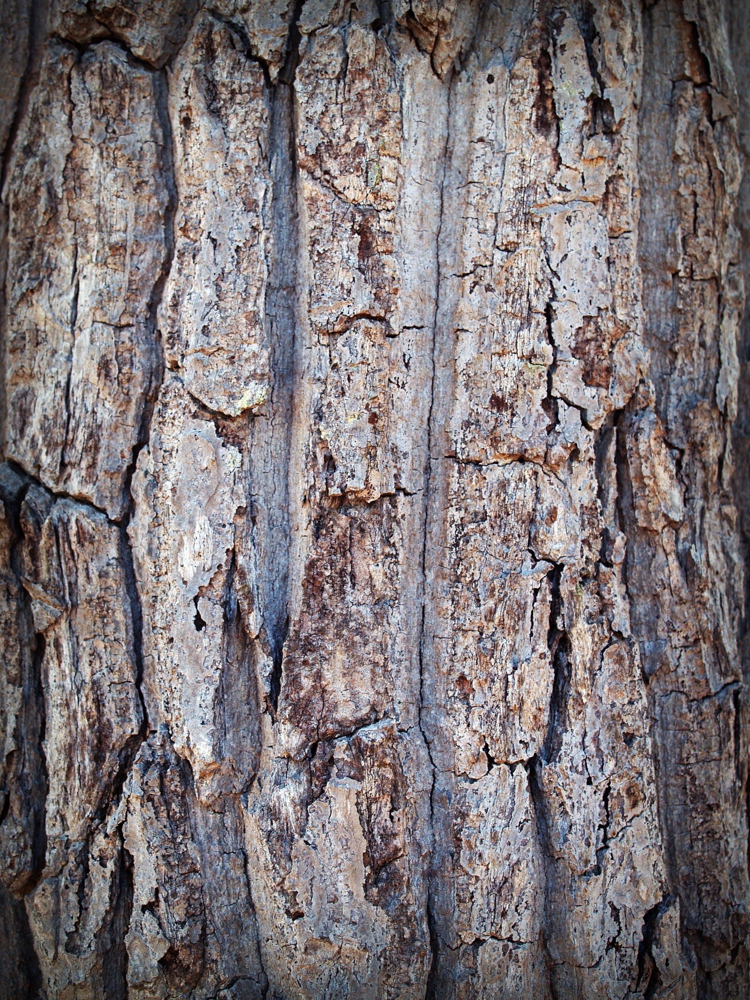 bark, brown, close-up