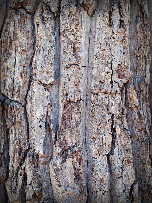 Foto stok gratis batang pohon, cokelat, coklat, detail