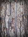 wood, texture, trunk