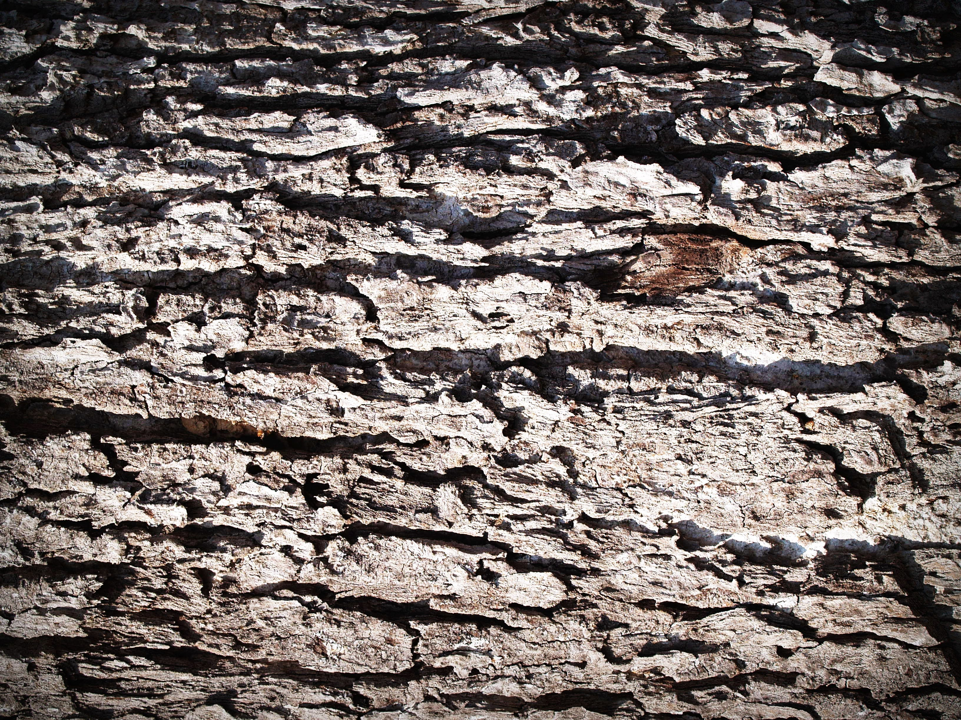 Fotos de stock gratuitas de árbol, áspero, bañador, corteza
