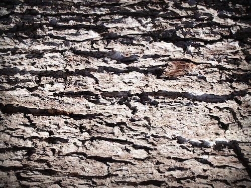 Kostnadsfri bild av åldring, bark, detalj, grov