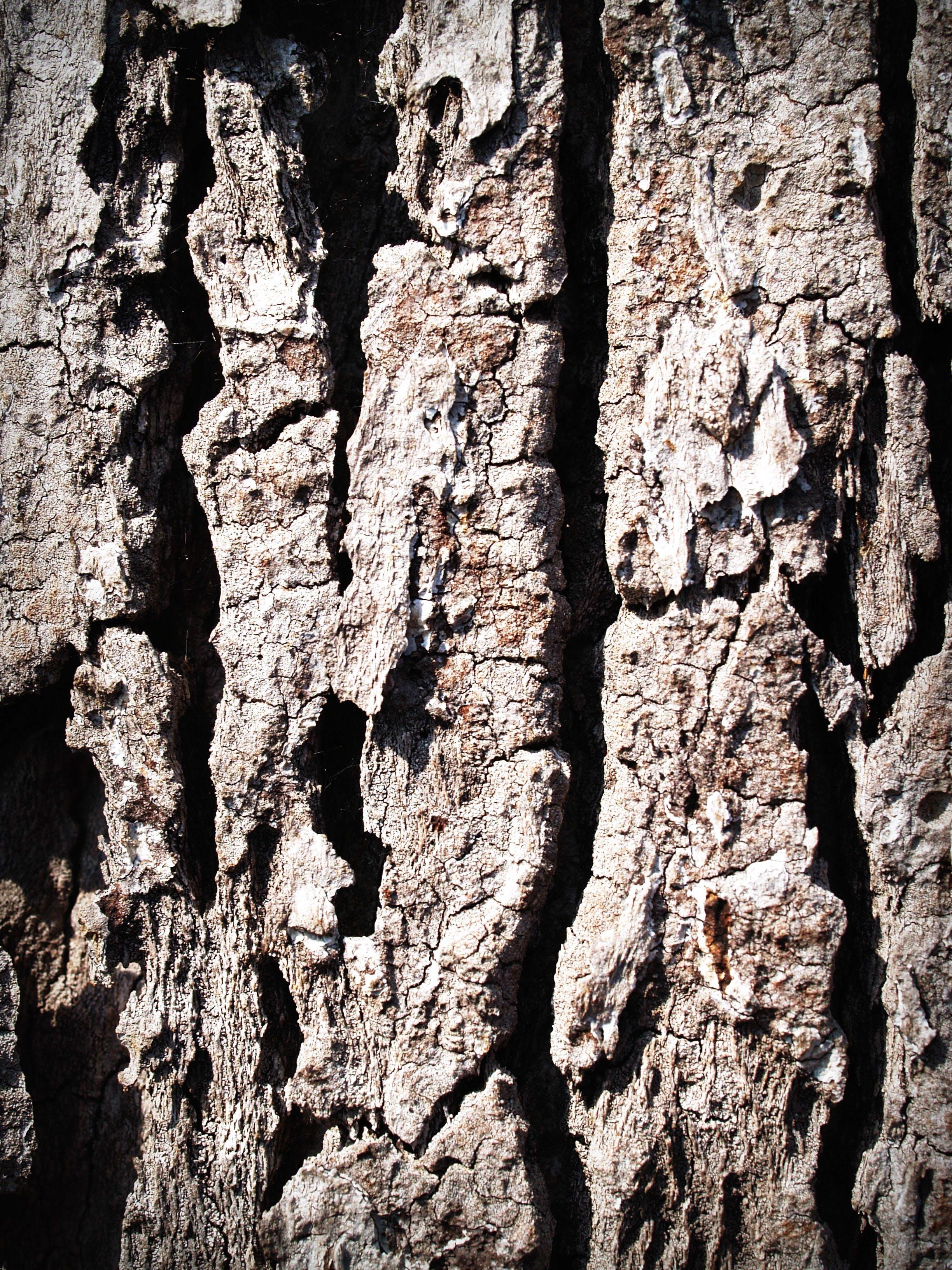 de árvore, áspero, casca, desbotado