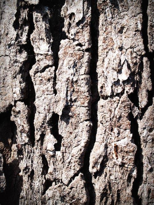 Kostnadsfri bild av bark, detalj, grov, textur