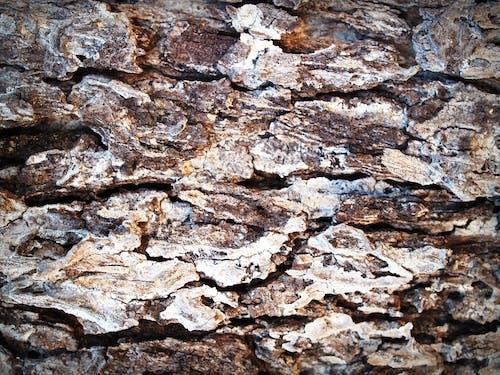 Kostnadsfri bild av åldring, bark, brun, detalj