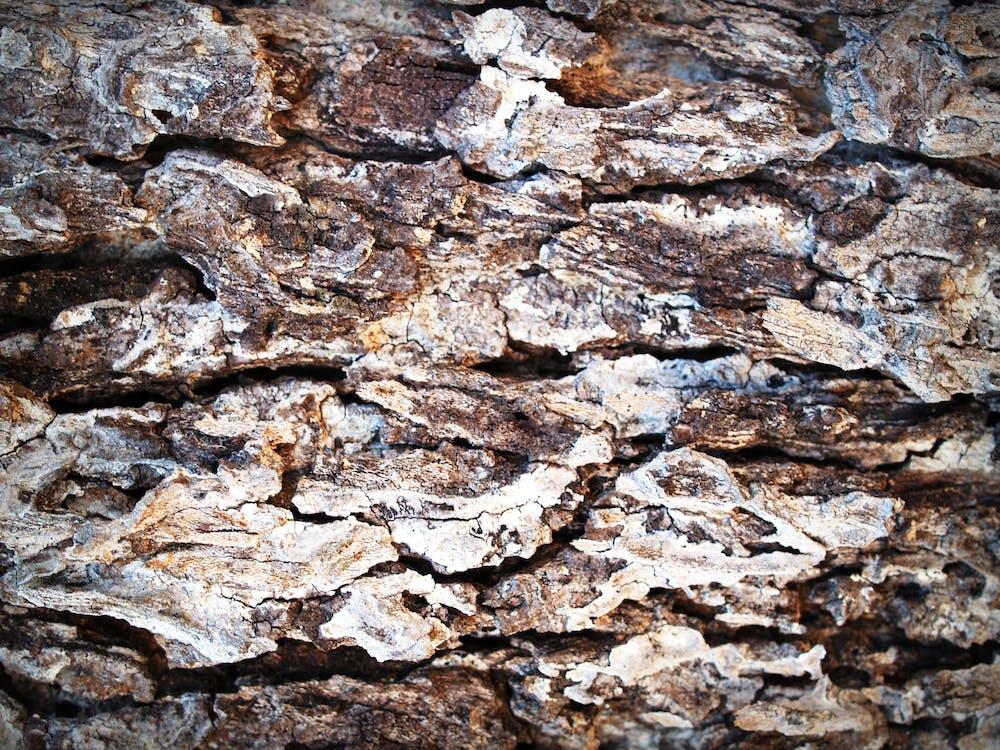detail, dřevo, hnědá