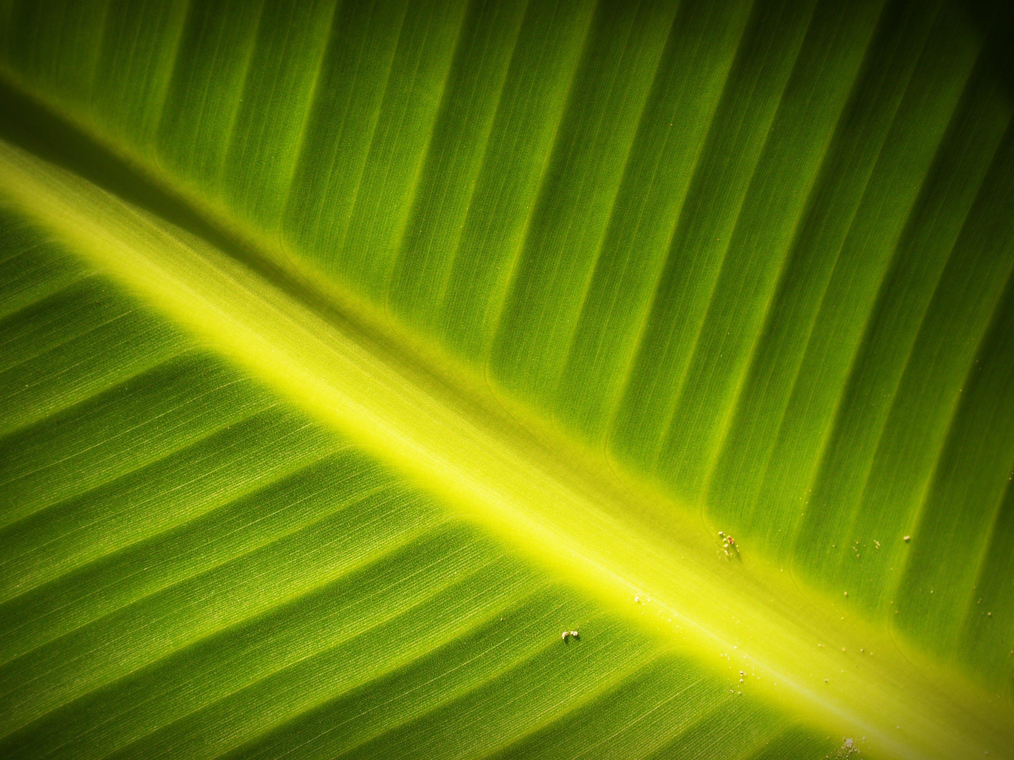 Kostenloses Stock Foto zu frisch, grün, muster, nahansicht