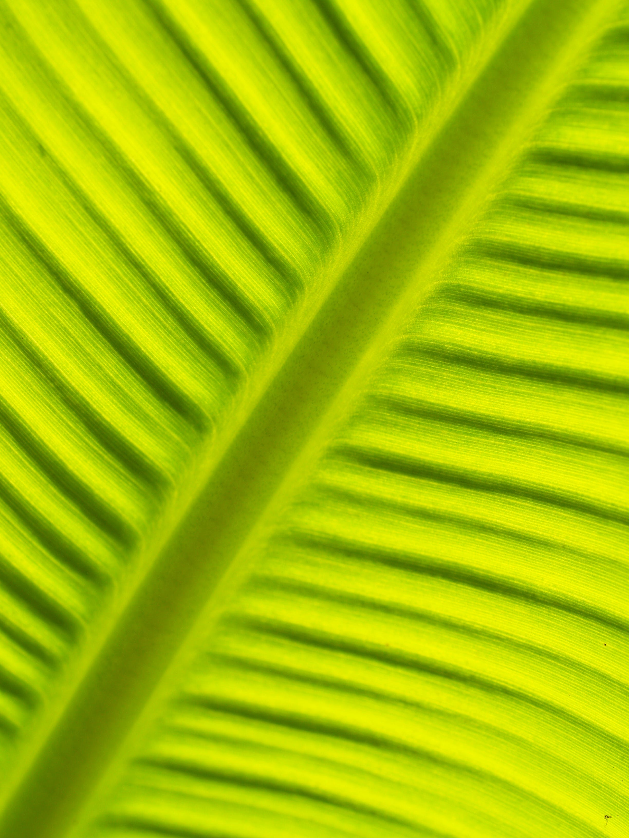 close-up, green, leaf