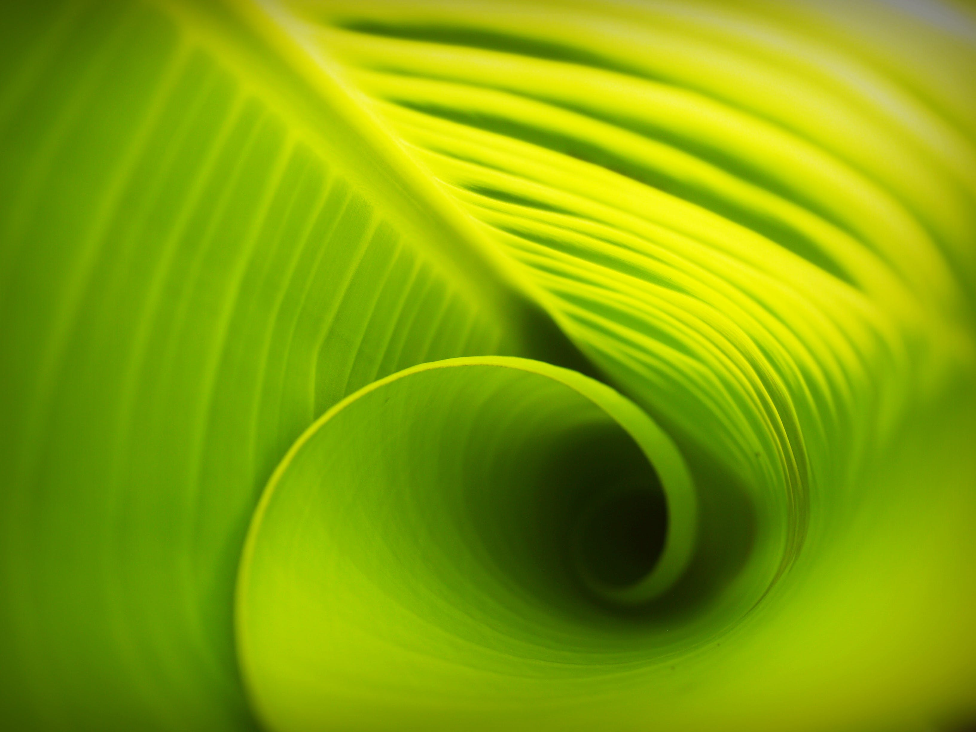 Free stock photo of background, banana leaves, drop, element