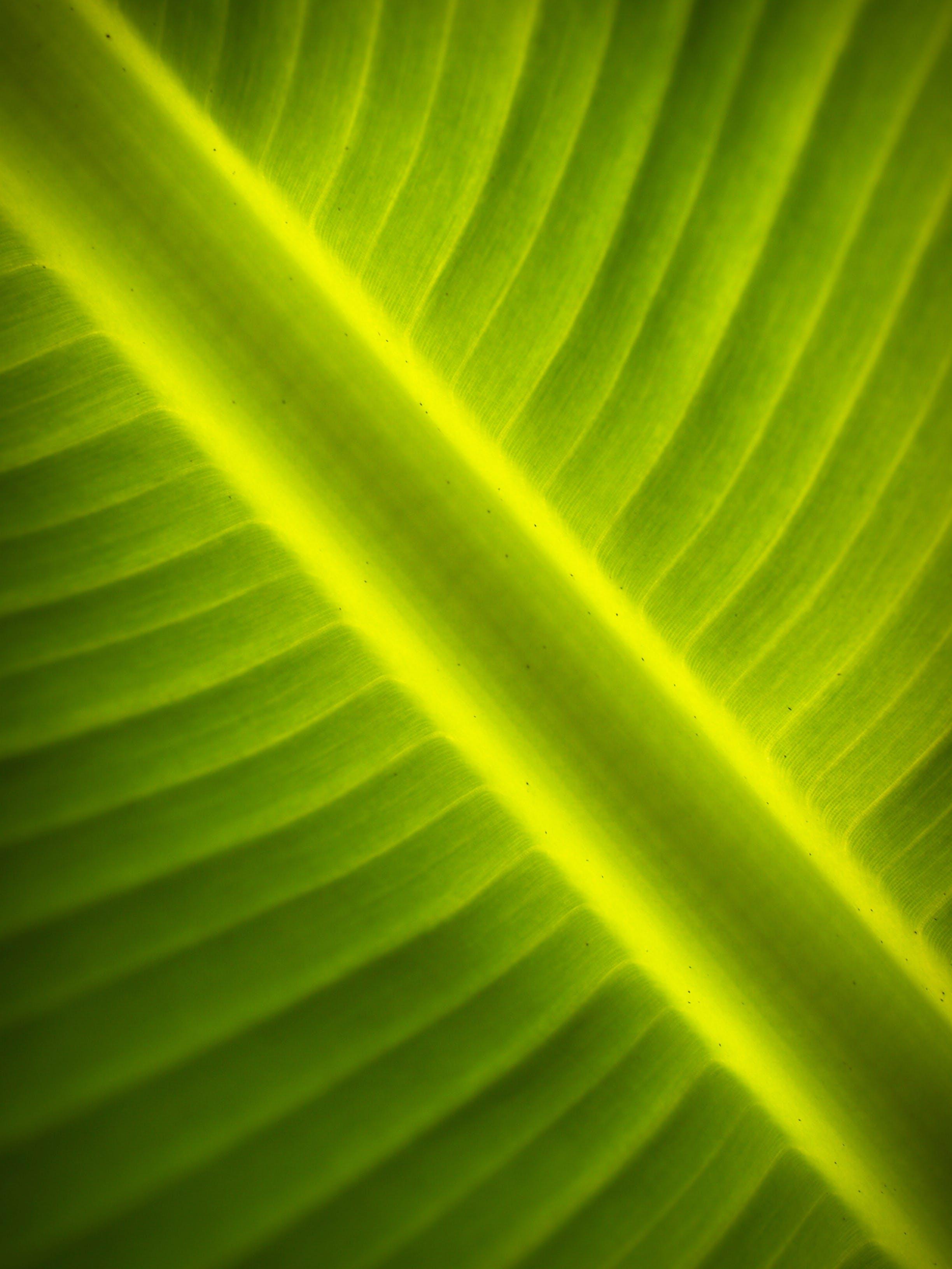 Close-up Photography of Green Banana Leaf