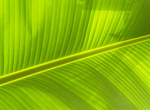 Free stock photo of pattern, texture, leaf, green