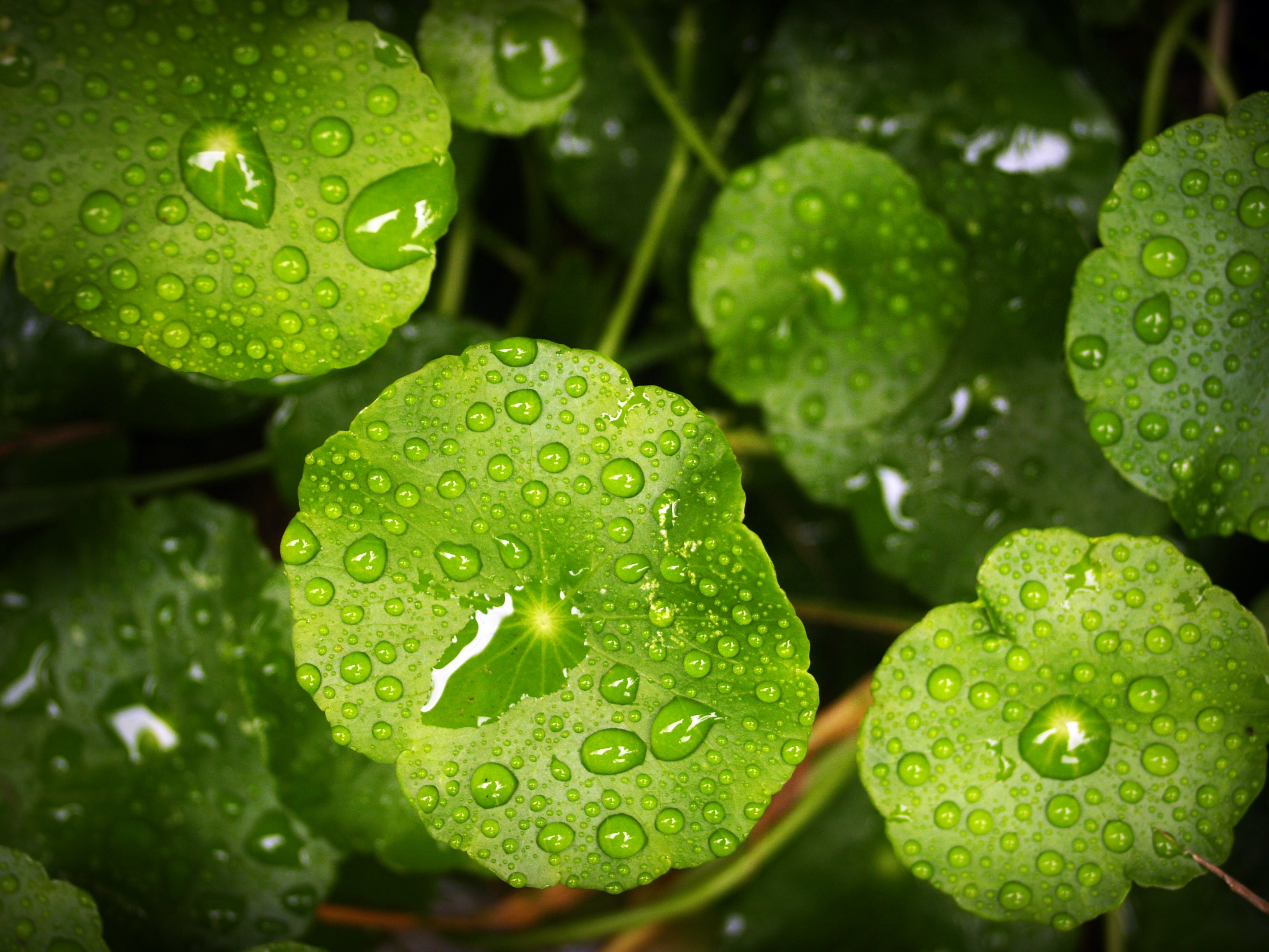 Water Droplet on Green Leafed Plant