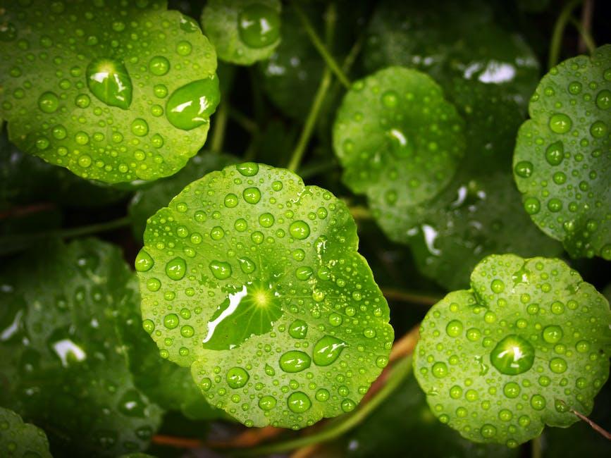 New free stock photo of nature, water, blur