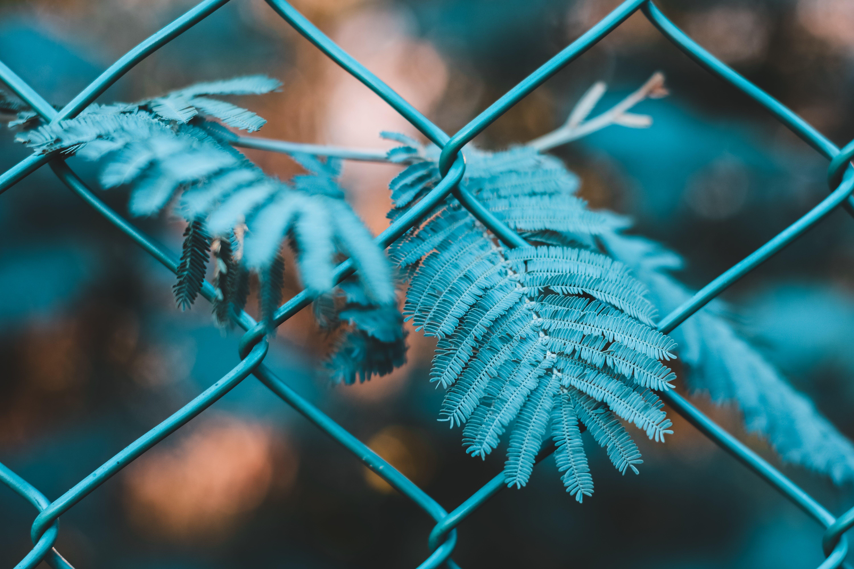 Základová fotografie zdarma na téma listy, pletivový plot, plot, rostlina