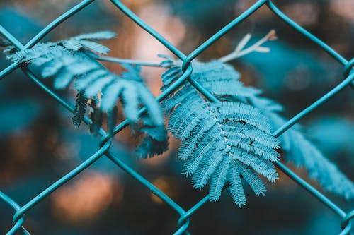 Fotobanka sbezplatnými fotkami na tému drôtený plot, listy, ohrada, rastlina