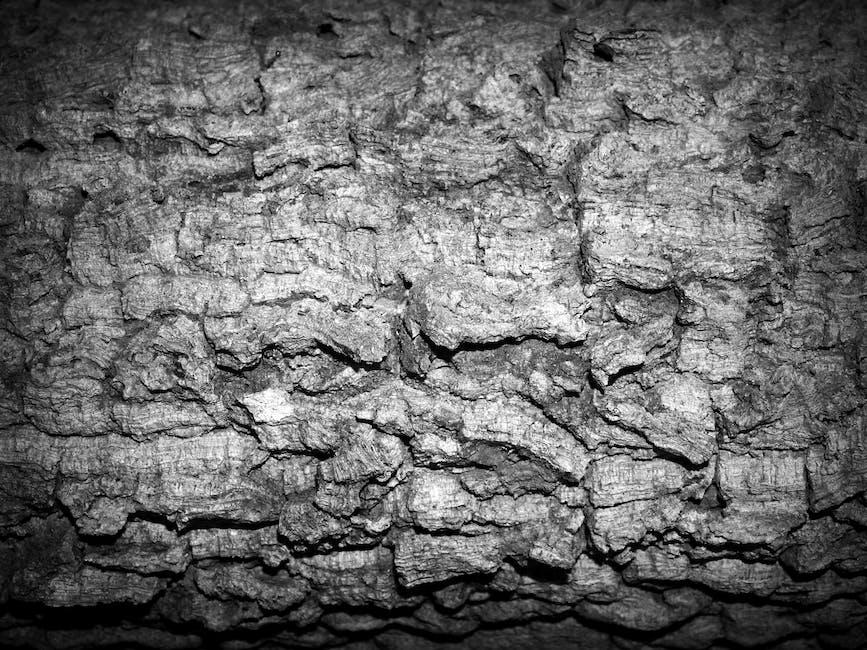 New free stock photo of black-and-white, nature, rocks
