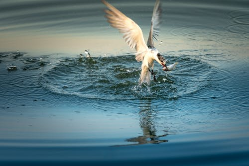 White Bird Above Water