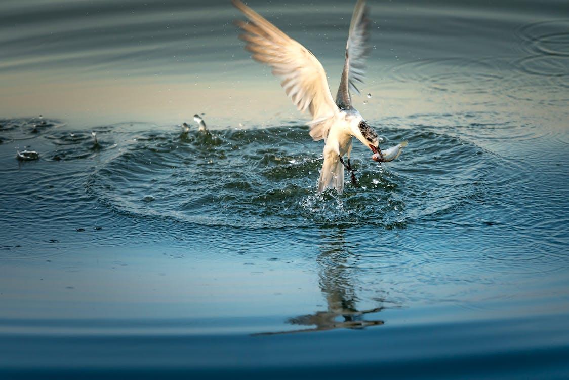White Bird Above Water