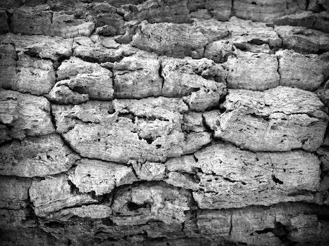 Kostenloses Stock Foto zu trocken, mauer, umwelt, zement