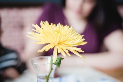 Ilmainen kuvapankkikuva tunnisteilla aamu, jousi, kukka, perhe