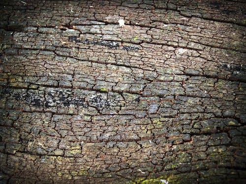 Immagine gratuita di abbaiare, albero, corteccia, dettaglio