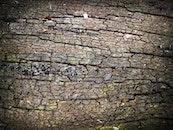 wood, dry, texture