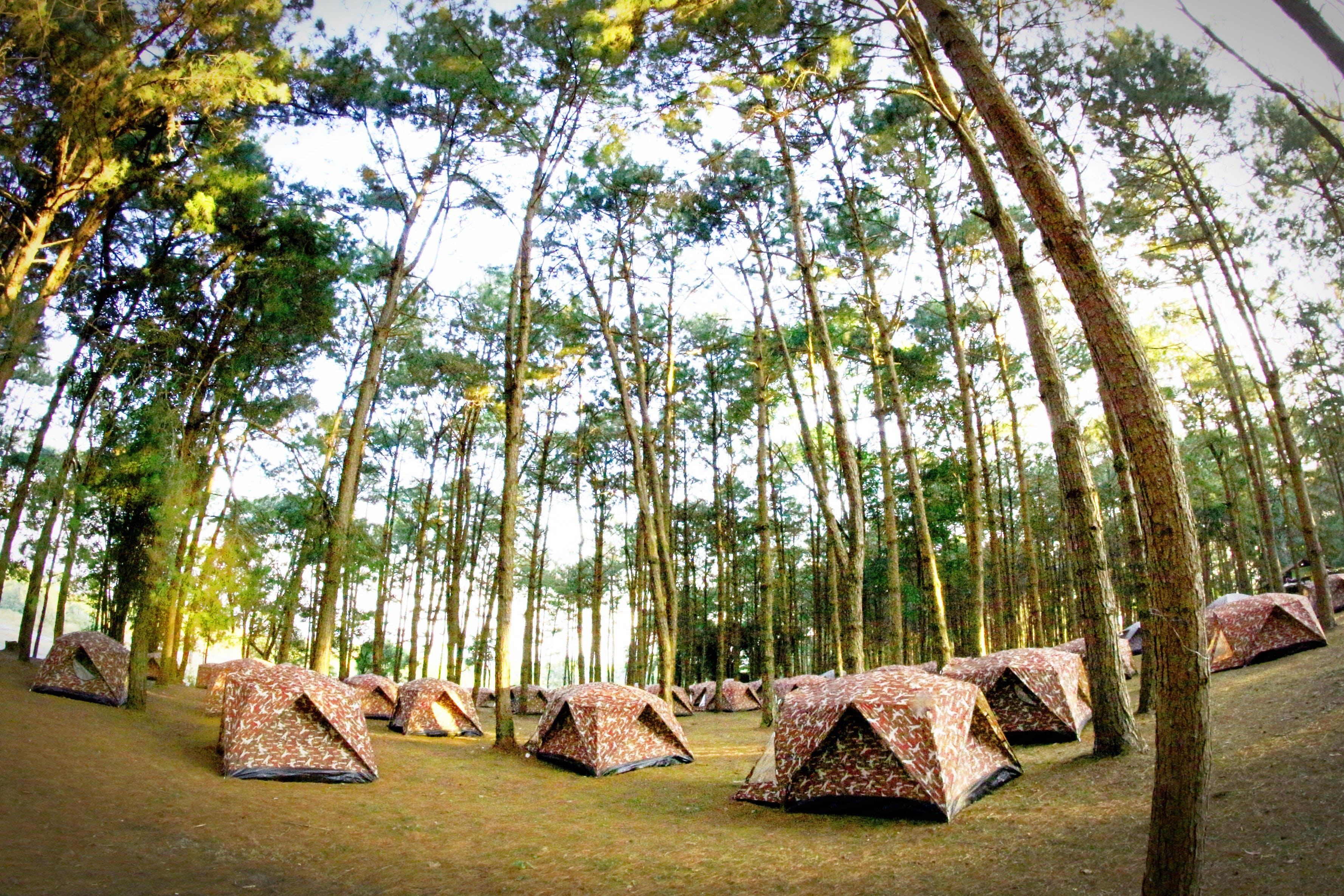 camp, camping, environment