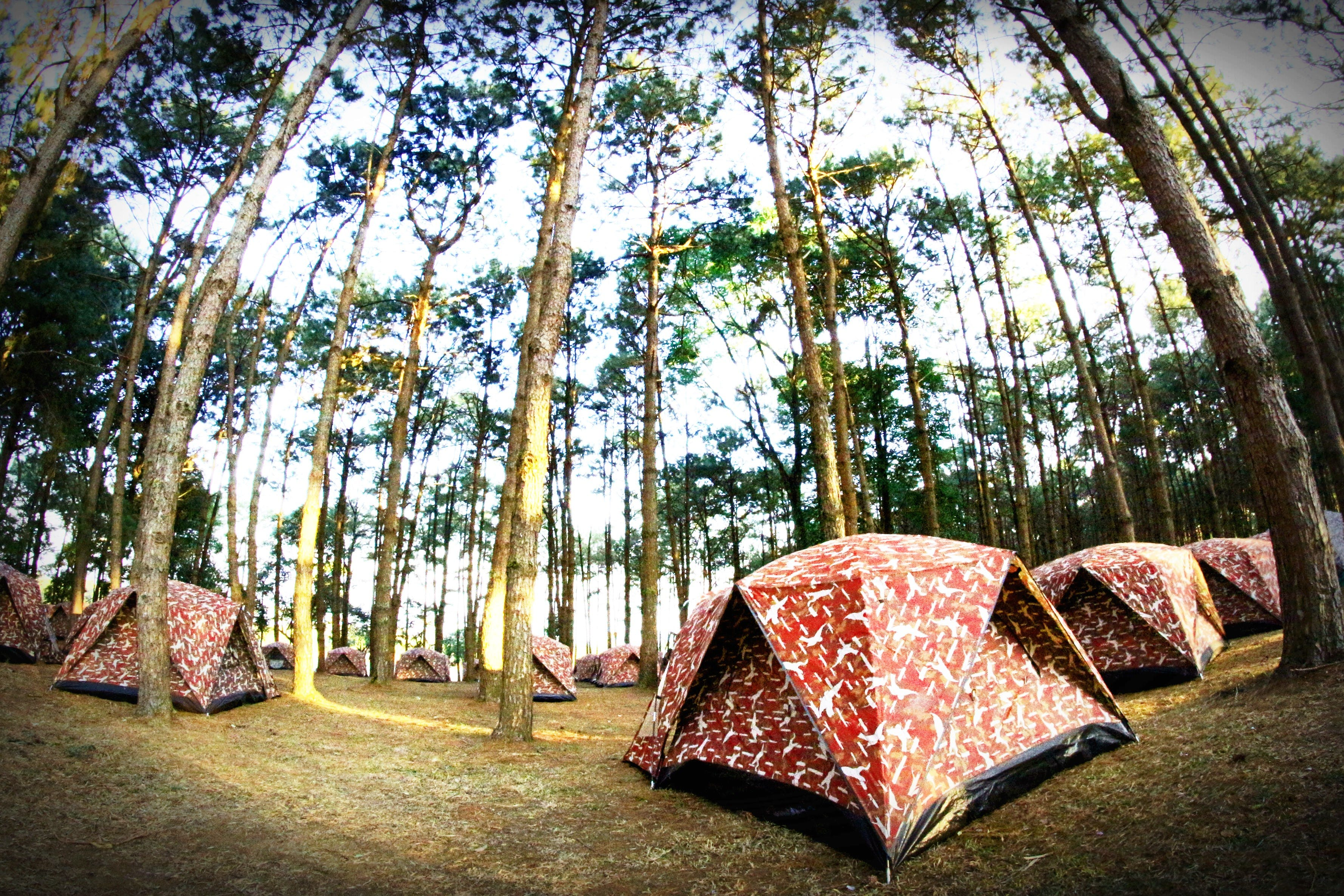 Fish-eye Lens Photography of Red-and-white Tents in the Middle of Forest