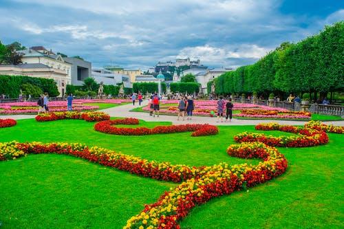Free stock photo of flower, flower garden