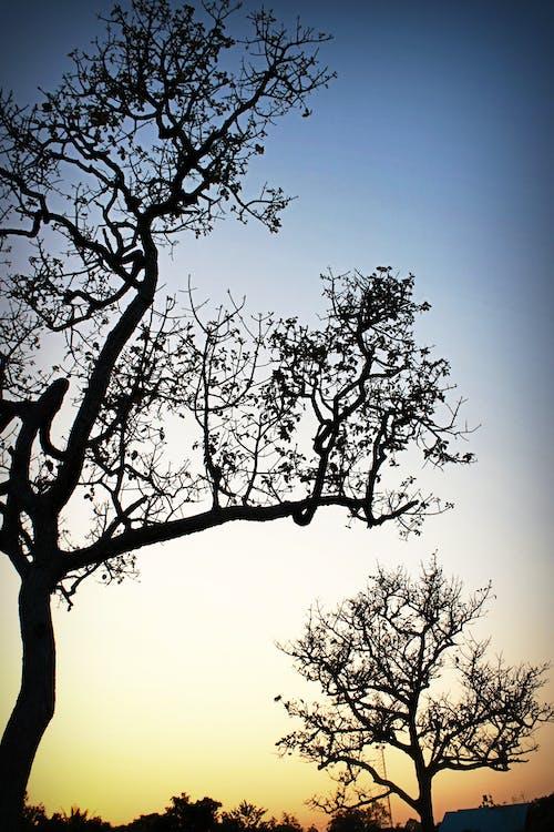 Δωρεάν στοκ φωτογραφιών με αυγή, γαλήνιος, δέντρα, ειδυλλιακός