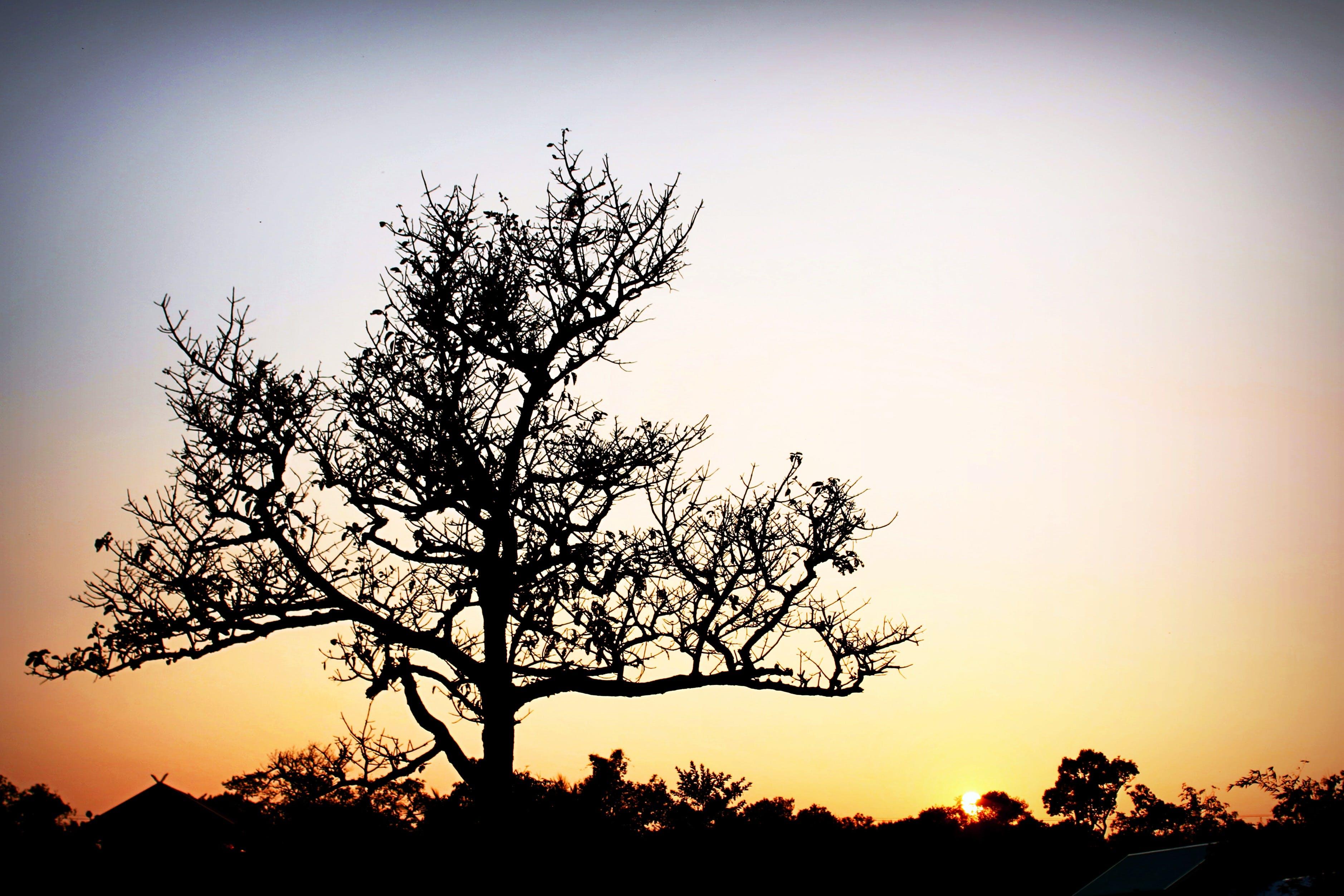 คลังภาพถ่ายฟรี ของ กิ่งไม้, งดงาม, ตะวันลับฟ้า, ต้นไม้
