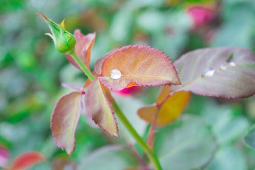 Free stock photo of dewdrop