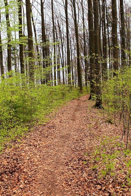 春天, 綠林 的 免費圖庫相片
