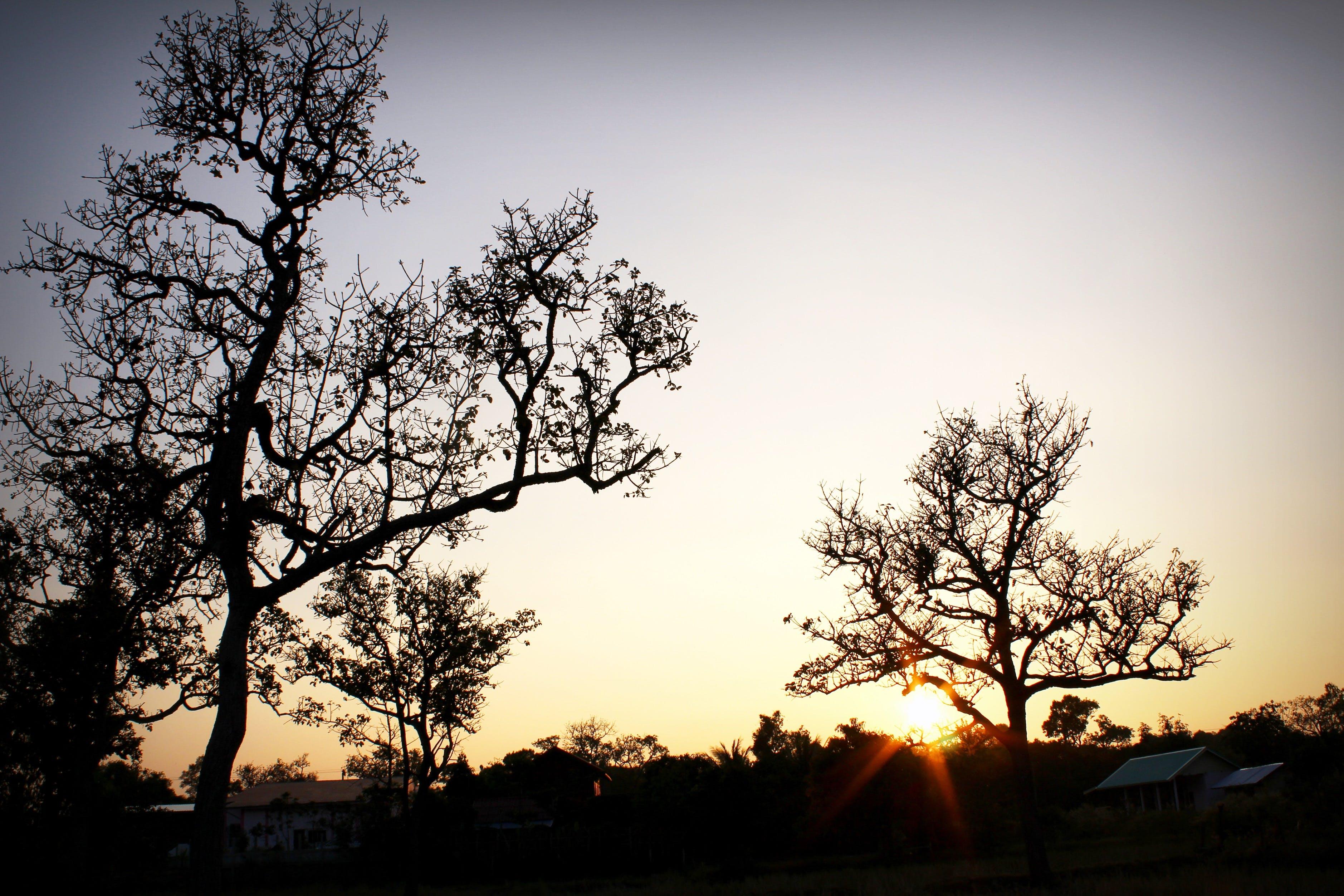 Foto d'estoc gratuïta de arbres, bonic, branques d'arbre, capvespre