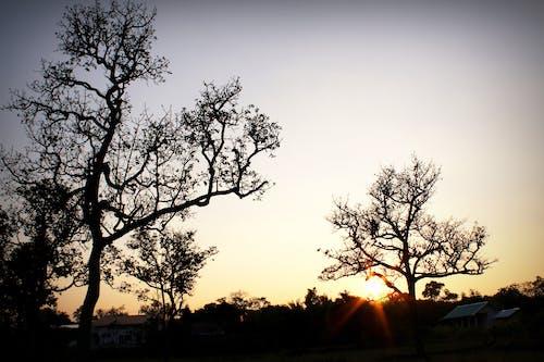 Бесплатное стоковое фото с ветви деревьев, восход, деревья, закат