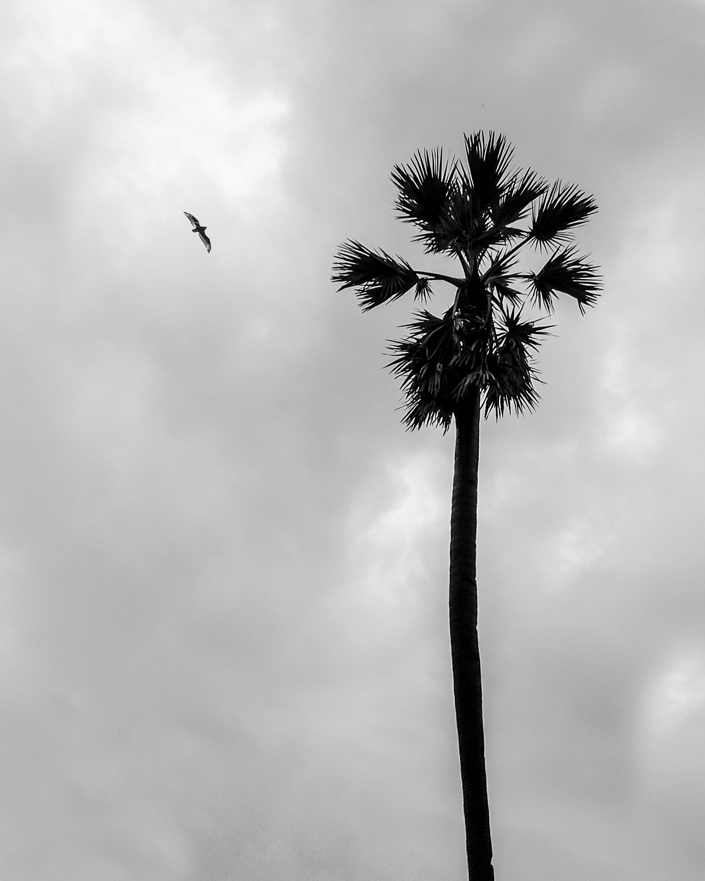 Free stock photo of bald eagle, beach, bird, black and white