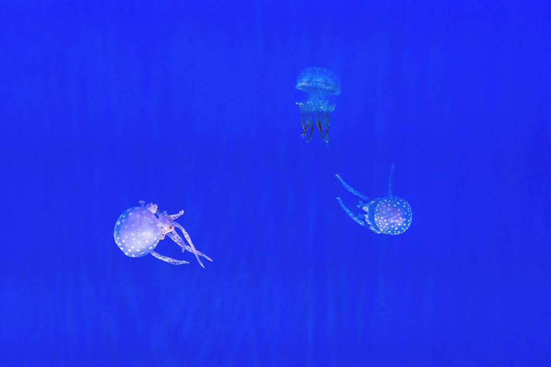 Three Jellyfish
