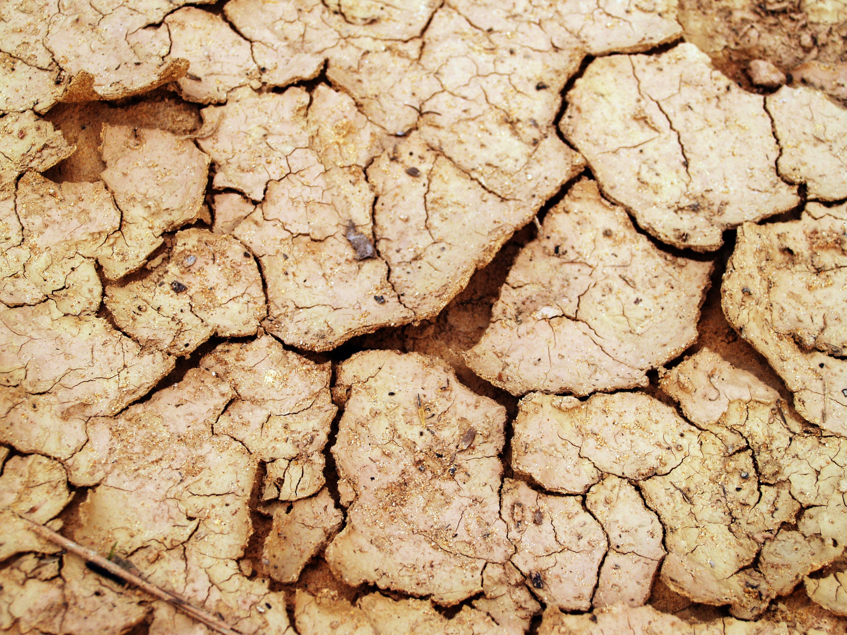 Dried Soil