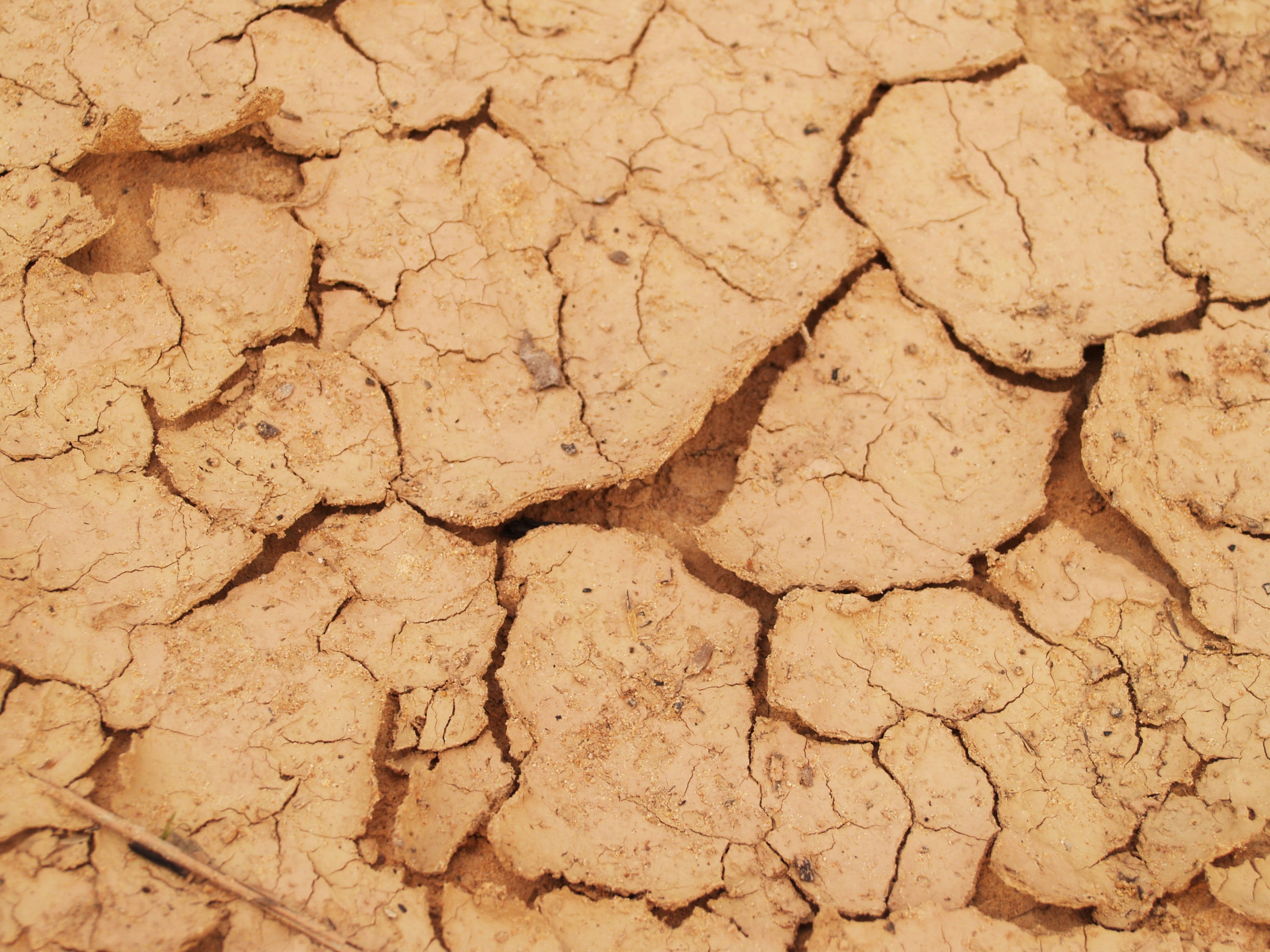 Free stock photo of nature, earth, summer, dry