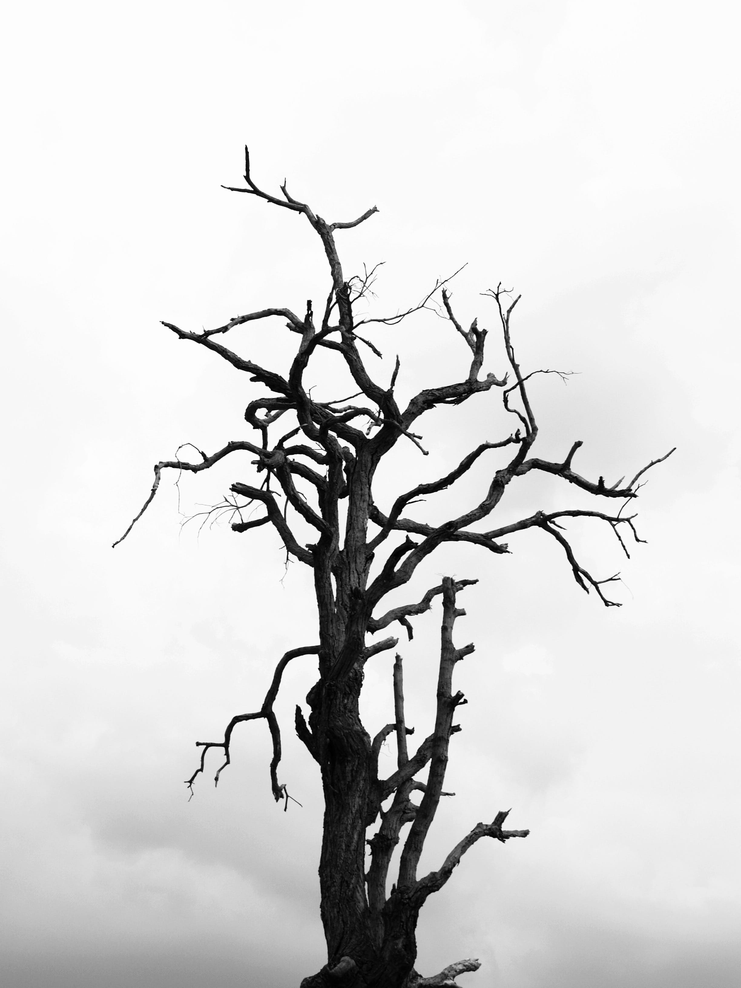 black and white, black-and-white, branches