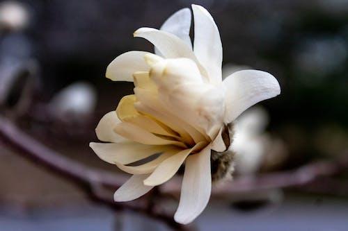 Ingyenes stockfotó 1. tavaszi virág témában