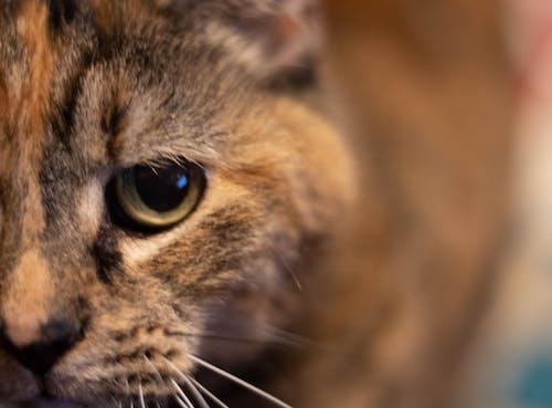 Ingyenes stockfotó macskaszem témában