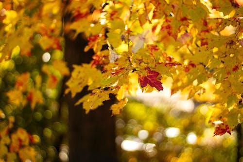 Ingyenes stockfotó őszi bokeh témában