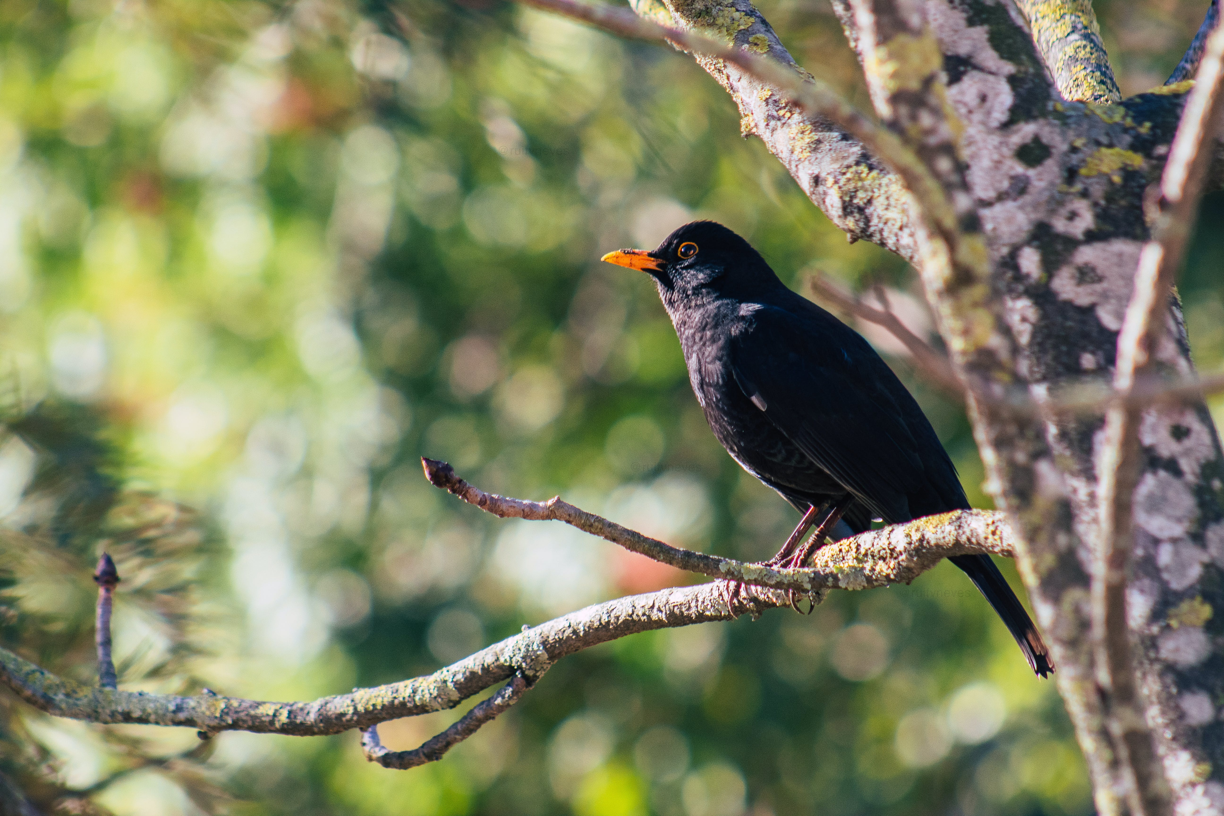 Close-up Photo of Black Bird Perched on Branch