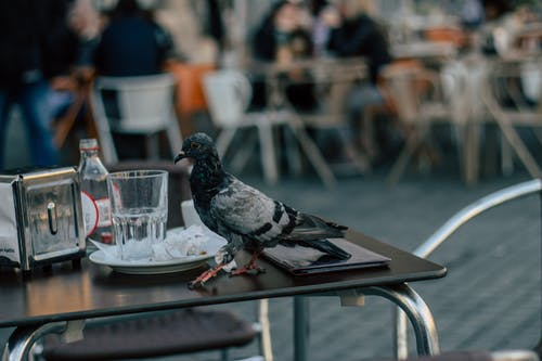 Selective Focus Photography Of Pigeon Walking On Table