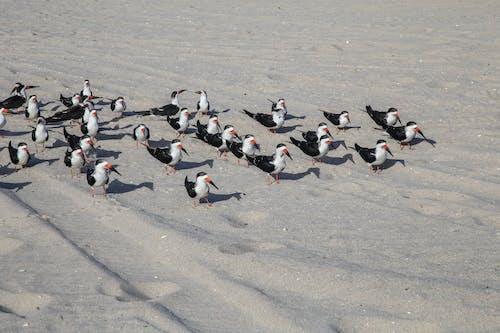 Foto stok gratis burung camar, burung-burung, lautan, pantai