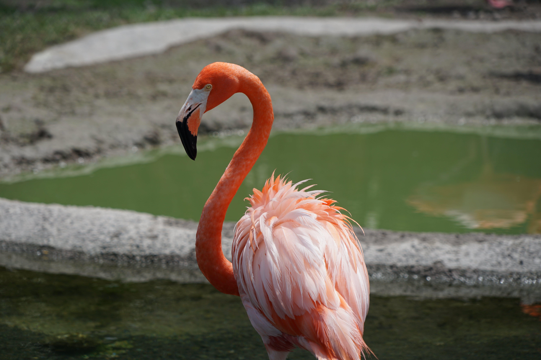 Free stock photo of animals, elephant, flamingo, miami